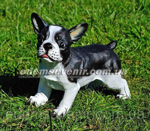 Садовая фигура собака Французский бульдог стоячий, фото 2