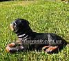 Садовая фигура собака щенок Ротвейлера, фото 3