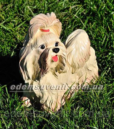 Садовая фигура собака Болонка, фото 2