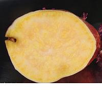 Маточный клубень Батат Египетский среднеспелый высокоурожайный вкусный столовый сорт, фото 1