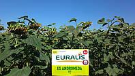 Семена подсолнечника Андромеда ЕС
