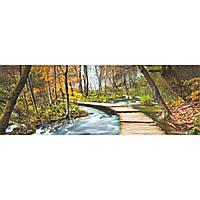 Фотошпалери на стіну Дорога в лісі, 183х254 см