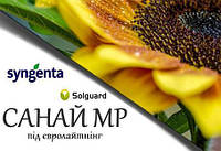 Гибрид подсонечника Сингента Санай МР под Евролайтинг (Syngenta)