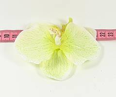 Головка орхідеї