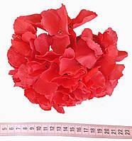 Головка гортензії преміум червона