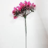 Трава едельвейс рожева