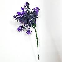 Трава едельвейс фіолетова