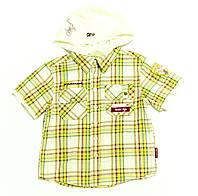 Рубашка для мальчика  Druzyna Skautow Клетка