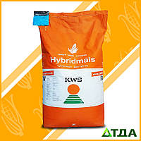 Семена гибрида кукурузы КВС 2370 ФАО 280
