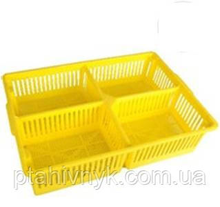 Ящик великий для добових курчат з чотирма поділками