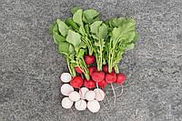 Семена редиса Роксан F1/Roxanne F1 (фракция 2,5-2,75) (5000 сем.), Bejo, Нидерланды