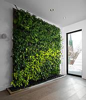 Вертикальное озеленение офиса. Фитостена. Фитомодуль.