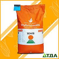 Семена гибрида кукурузы КВС 2323 ФАО 260