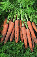 Семена моркови Ньюхол F1/Newhall F1 (2,0-2,2 мм) ( 1 млн. сем.), Bejo, Нидерланды