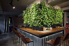 Вертикальное озеленение кофейни. Фитостена. Фитомодуль.
