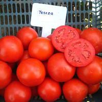 ТЕРЕЗА F1 / TEREZA F1  — томат детерминантный, SEMO 100 семян