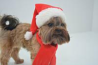 Новогодний набор Дед мороз, Санта Клаус для собак шапка+ шарф, фото 1
