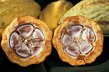 Какао боби не обсмажені 500 г/упаковка, фото 2