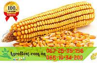 Кукуруза НОВЫЙ (ФАО330)