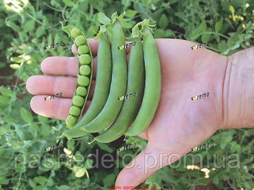 Семена овощного гороха Оскар 1 кг. Semo