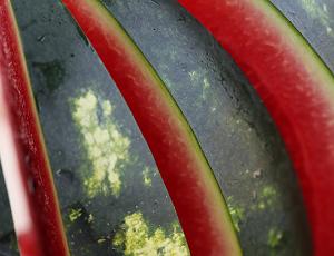 Семена МИРСИНИ F1/ MIRSINI F1, 1000 семян — арбуз, Syngenta, фото 2