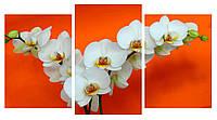 Модульная картина Декор Карпаты 100х53 см Белые орхидеи (M3-t14)
