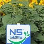 Семена подсолнечника - Меридиан