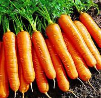 Семена Моркови сорт Вита лонга, пакет 10х15 см