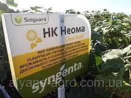 Неома Сингента (под Евролайтинг) высокоурожайный гибрид семена подсолнечника
