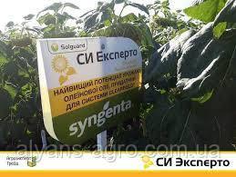 Эксперто Сингента (под Евролайтинг) семена подсолнечника