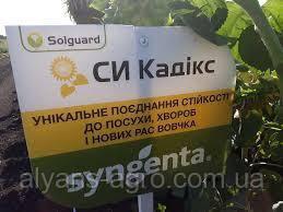 СИ Кадикс Сингента  семена подсолнечника