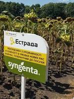 Эстрада Сингента семена подсолнечника