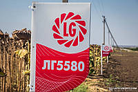 ЛГ 5580 Лимагрейн семена подсолнечника