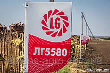 ЛГ 5580 Лімагрейн насіння соняшнику