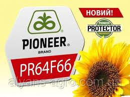 Пионер PR64F66 (ПР64Ф66) семена подсолнечника, семена подсолнуха
