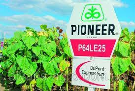 Пионер P64LE25 (П64ЛЕ25). Под Гранстар семена подсолнечника