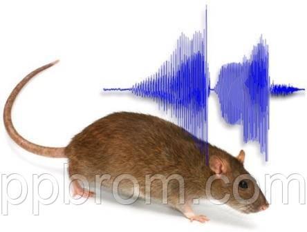 слух мышей и крыс воспринимает ультразвук