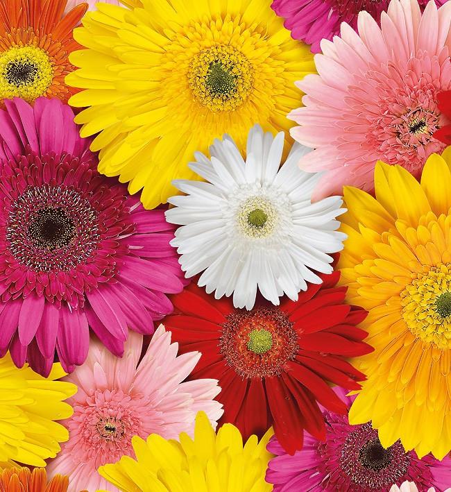 Клеёнка отрезная на стол Люкс яркие цветы