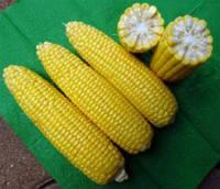 Семена кукурузы Турбин F1 50 шт.