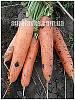 Семена моркови Тема F1 (250000шт) Libra Seeds (Erste Zaden)