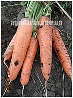Морковь Тема F1 (100000шт) Erste Zaden