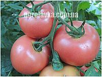 Семена томата розового индетерминантного Пинк Энжел F1 (250шт) Libra Seeds (Erste Zaden)