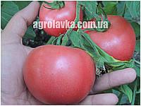 Семена томата розового индетерминантного Рози Пинк F1 (1000шт) Libra Seeds (Erste Zaden)