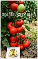 Семена томата красного индетерминантного Сорренто F1 (500семян) Libra Seeds (Erste Zaden)