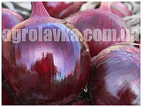 Семена лука Ройо Дуро F1 (250000семян) Libra Seeds (Erste Zaden)