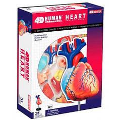 Анатомическая модель Сердце человека, 4D Master 26052