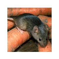 Как избавиться от мышей, фото№5