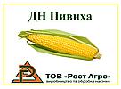 КУКУРУЗА ДН ПИВИХА (ФАО 190), Ф1, 2019 г.у. (Рост Агро), фото 2