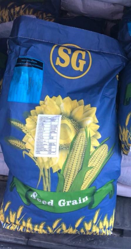 Кукуруза Глостер
