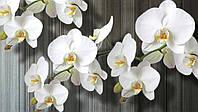 Фотообои 3D цветы (бумажные, флизелиновые)368x254 см Пучок белых орхидей (1015CN)